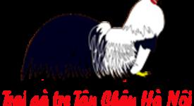 Trại gà tre tân châu Hà Nội nơi khởi nguồn đam mê gà cảnh