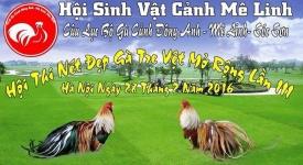 Cuộc thi nét đẹp gà tre Việt do CLB gà cảnh Đông Anh – Mê Linh – Sóc Sơn tổ chức