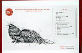 bảng tiêu chuẩn gà tre tân châu