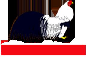 Trại gà tre Tân Châu Hà Nội